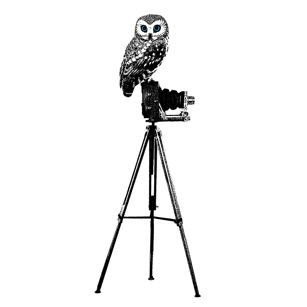 Steve the Owl by Decibel Clothing by Decibel Clothing
