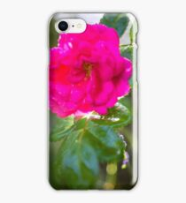 rote rose nach regen iPhone Case/Skin