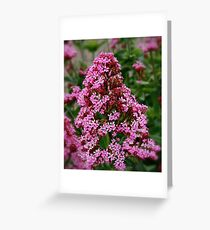 Spice Flower Greeting Card