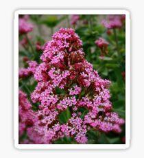 Spice Flower Sticker