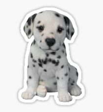 Dalmatian Puppy  Sticker