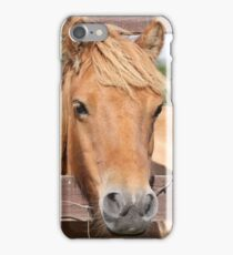 Shetland Pony iPhone Case/Skin