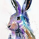 Hare by Jacki Stokes
