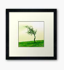 Scraggly Phoenix Park Tree Framed Print