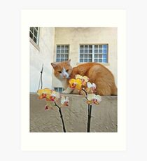 Cat Behind the Flowers Art Print