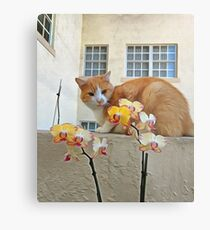 Cat Behind the Flowers Metal Print