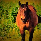"""""""Horses with Attitude no. 3, 'You Wanna Piece of This?'""""... prints and products by Bob Hall©"""