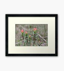 Spring Paintbrushes II Framed Print
