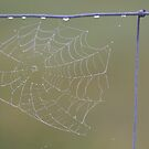 Dewy Web by Kathi Huff
