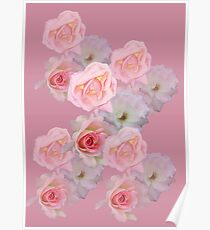 24 pink roses Poster
