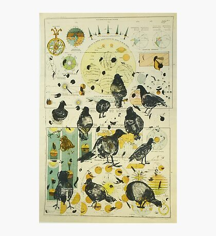 Global Pigeon Photographic Print