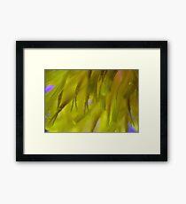 Macro Pollen  Framed Print