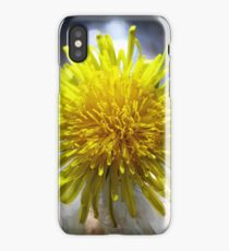 Macro Daisy iPhone Case/Skin