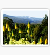 Kniphofia - Blue Mountains Botanic Gardens Sticker