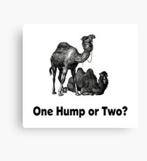 Funny Camels One Hump or Two Canvas Print