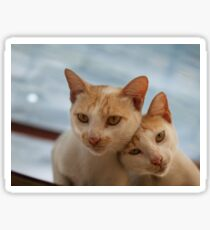 COUPLE CATS Sticker