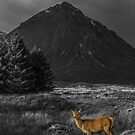 Red Deer Hind - Colour Popped by Sandra Cockayne