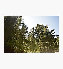 Trees of Waterton Lakes NP Photographic Print