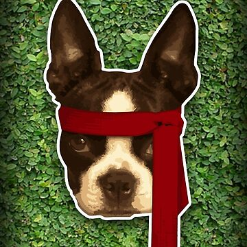 Boston terrier Rambo by jamesf23