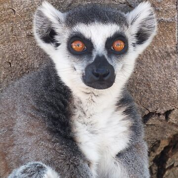 Ring-tailed lemur by LeaGerard