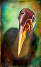 Finer Feathered Friends: Red knobbed Hornbill by alan shapiro