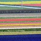 Holland panorama by bubblehex08