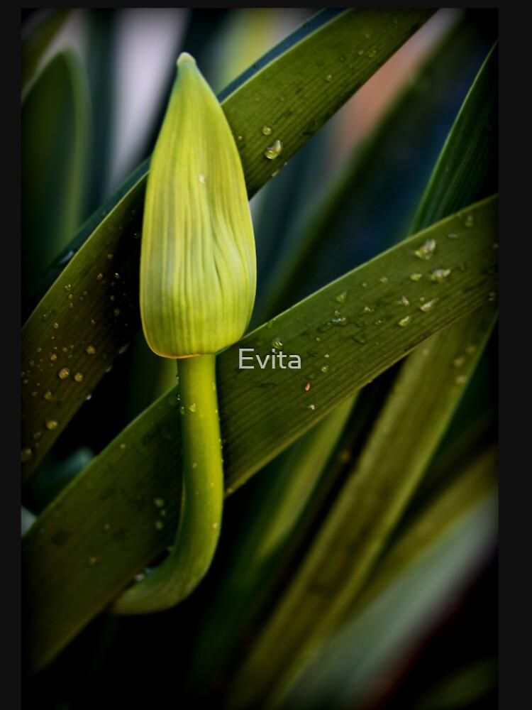 Ich warte nur auf Bloom von Evita