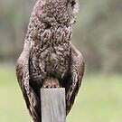 Great Grey Owl III by Kathi Huff