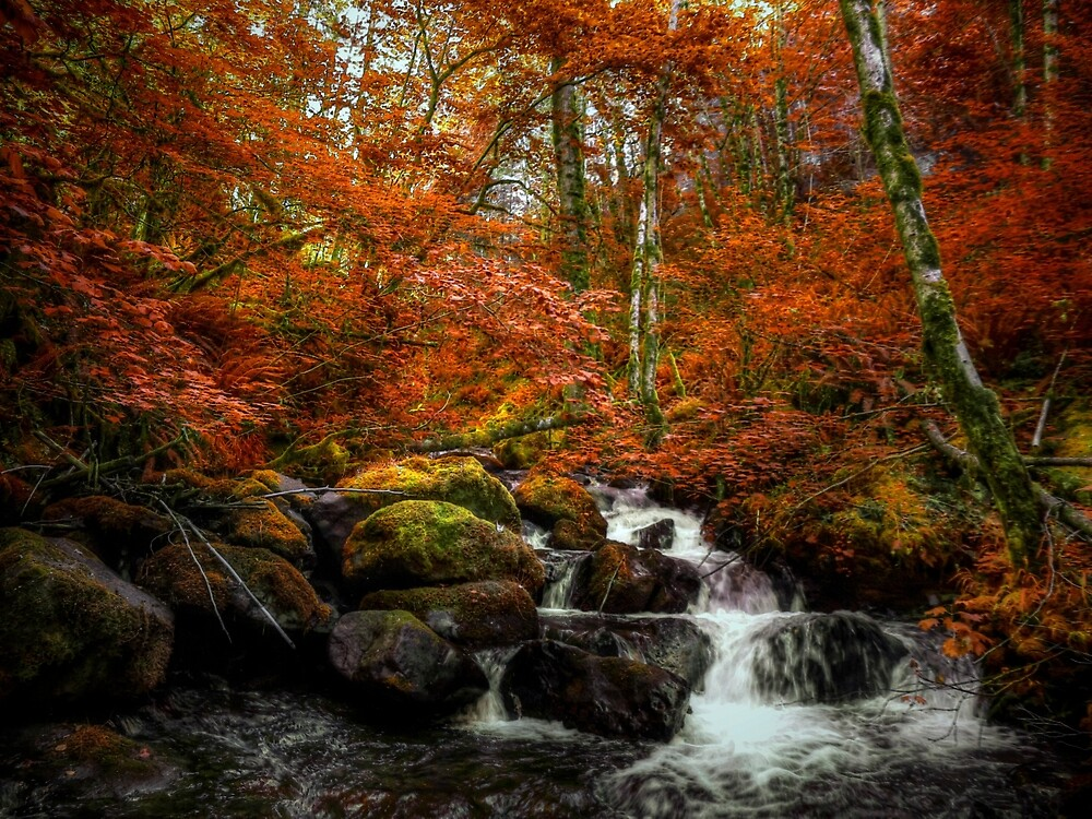 Two-Three-Four I Want More ~ Fall Colors ~ by Charles & Patricia   Harkins ~ Picture Oregon
