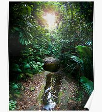 Daintree rainforest water hole Poster