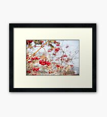 Frozen red berry Framed Print