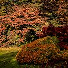 Autumn Glory by Colin Metcalf