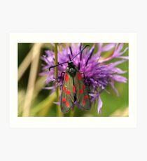 Six Spot Burnet Moth Art Print