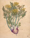 Fennel Heart by Fay Helfer