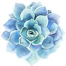 Watercolor blue tones succulent illustration by artonwear