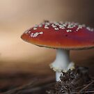 There is a fairy under the toadstool by Clare Colins