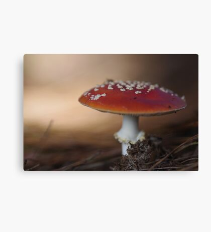 There is a fairy under the toadstool Canvas Print