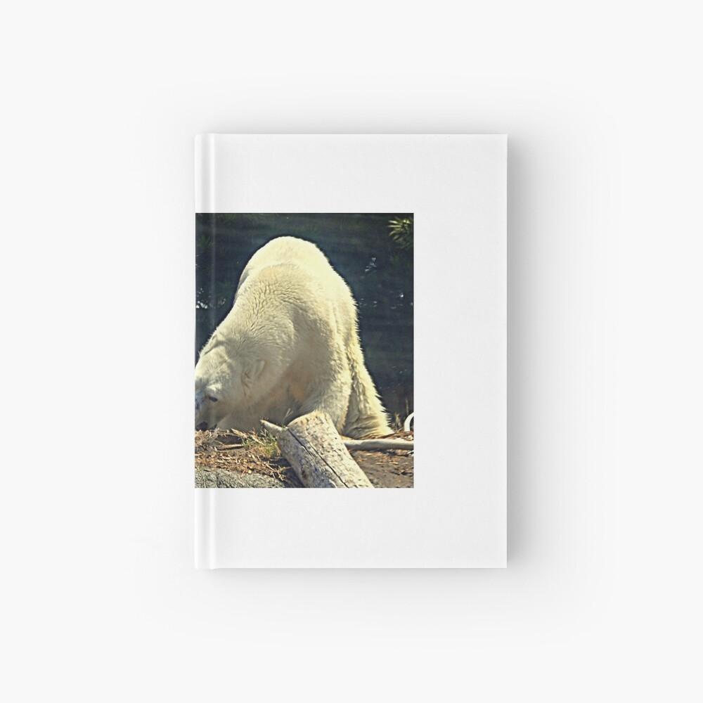 Bären.... Notizbuch