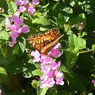 Butterfly of November by Navigator