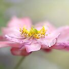 Japanese anemone by Lyn Evans