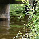water under the bridge by Rainydayphotos