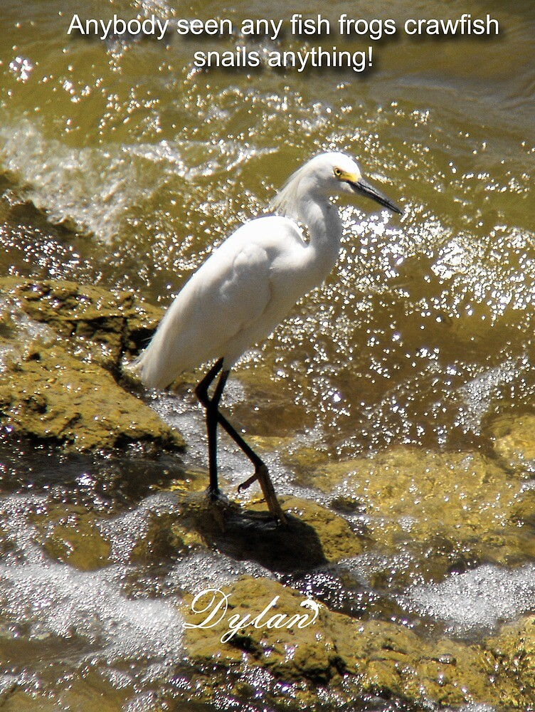 Egret searching for a meal by DylanAndDot