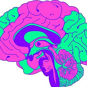 Brain by paulinebrdt