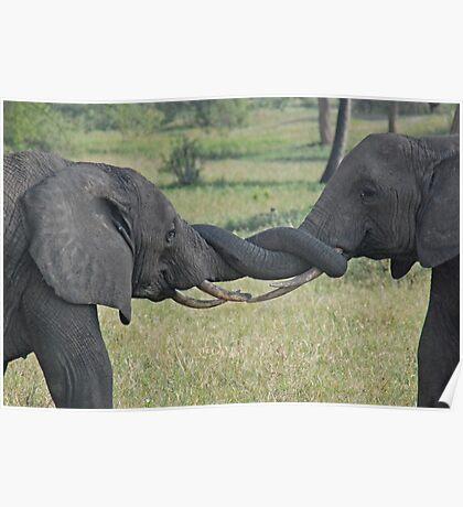 In a Tangle - Tarangire National Park, Tanzania Poster