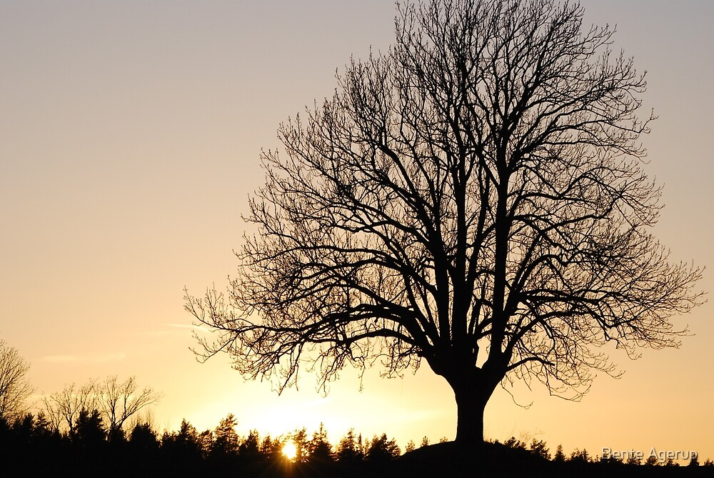 The Tree by Bente Agerup