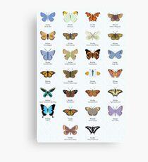 Schmetterlings-Alphabet Leinwanddruck