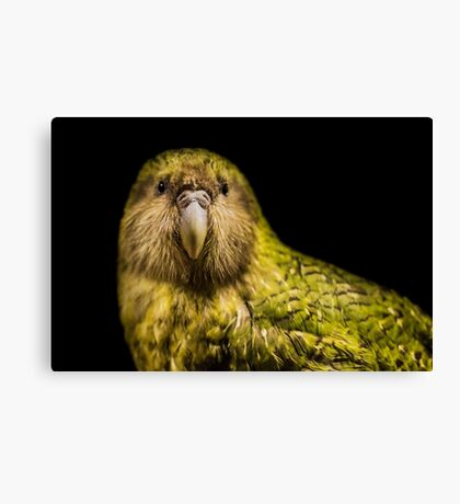 Kakapo - New Zealand Canvas Print