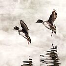 Enten, die auf dem See landen von Peggy Collins