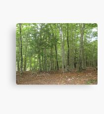 Forest 9 Canvas Print