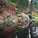 Jack Lake Algonquin by BonnieToll
